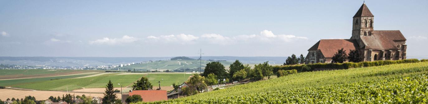 Bollinger Champagne omgeving