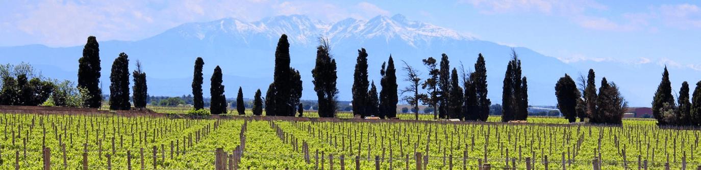 Cazes Wijngaarden