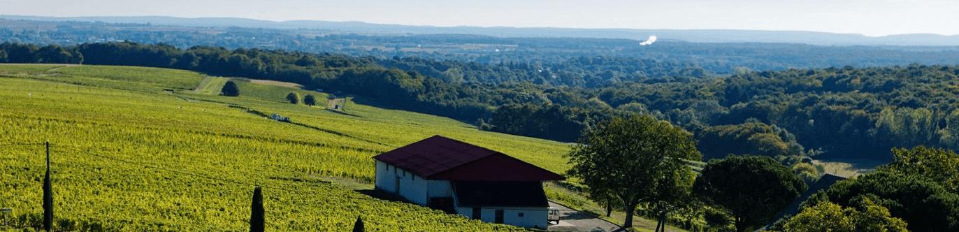 Langlois-Chateau Wijngaard
