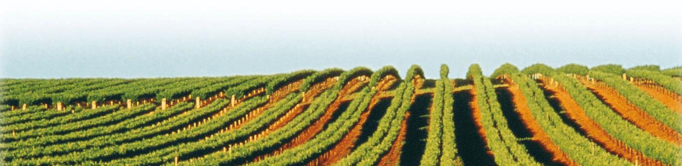 Oxford Landing Wijngaarden