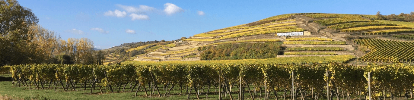 Rene Mure wijngaarden